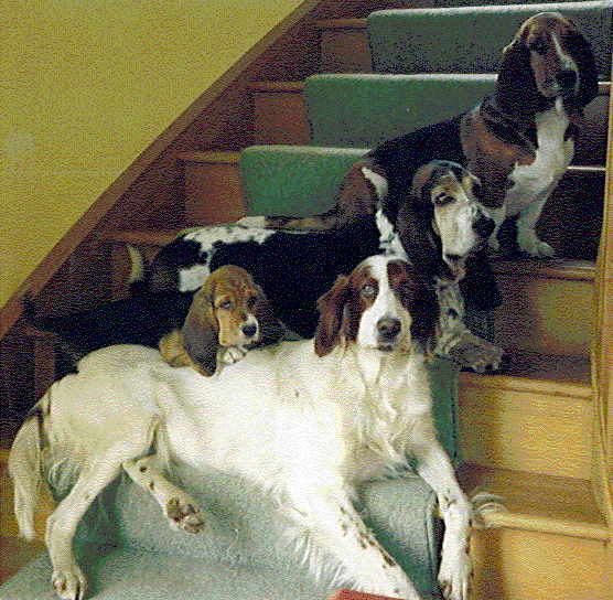 Dogs on the Stairs